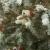 Πρωτοχρονιά Χριστουγεννιάτικα τραγούδια από την Κατερίνα Τσουλή & τον Καβαρνό Παναγιώτη.